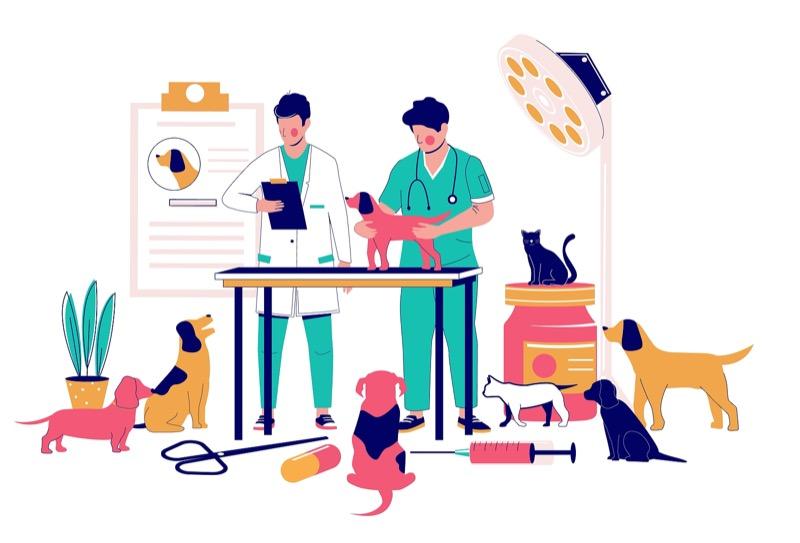 Veterinary Clinic Design Considerations